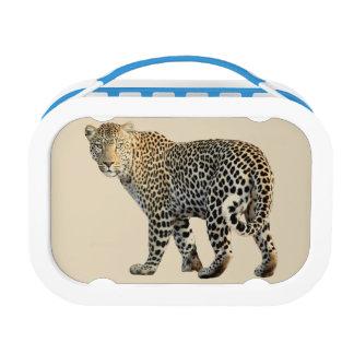 leopard lunch box