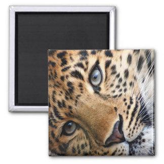 Leopard Magnet