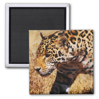 Leopard Refrigerator Magnets