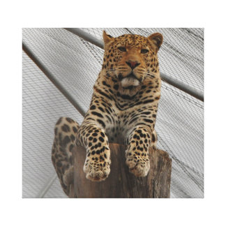 Leopard on a big log looking peaceful canvas print