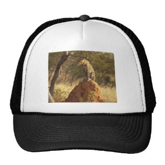 Leopard on Termite Mound in Namibia Hat