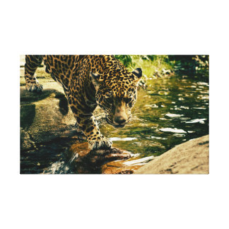 Leopard on the Water Canvas Print