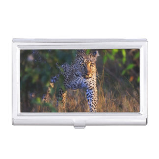 Leopard (Panthera Pardus) as seen in the Masai Business Card Holder