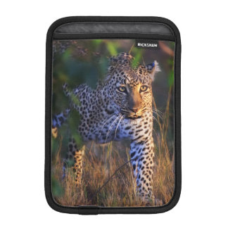 Leopard (Panthera Pardus) as seen in the Masai iPad Mini Sleeve