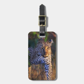 Leopard (Panthera Pardus) as seen in the Masai Luggage Tag