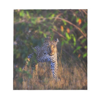 Leopard (Panthera Pardus) as seen in the Masai Notepad