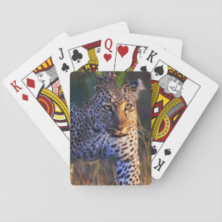 Leopard (Panthera Pardus) as seen in the Masai Playing Cards