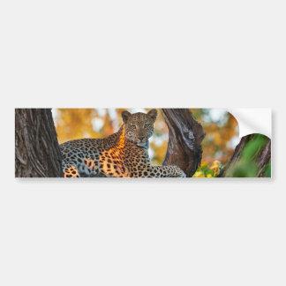 Leopard (Panthera pardus) Bumper Stickers