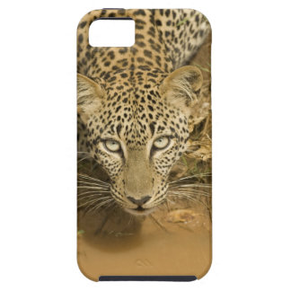 Leopard, Panthera pardus, drinking from a iPhone 5 Cover