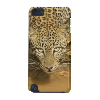 Leopard, Panthera pardus, drinking from a iPod Touch (5th Generation) Covers
