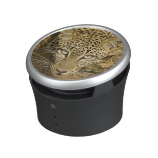 Leopard, Panthera pardus, drinking from a Speaker