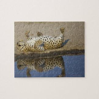 Leopard (Panthera pardus) female rolling on Jigsaw Puzzle