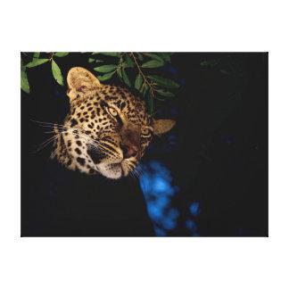Leopard (Panthera Pardus), Greater Kruger Canvas Print