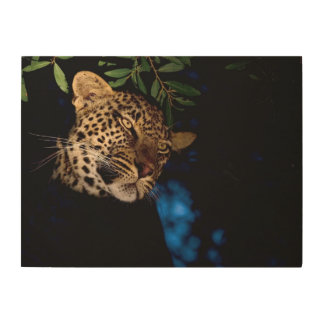 Leopard (Panthera Pardus), Greater Kruger Wood Print