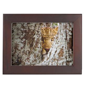 Leopard (Panthera Pardus) Hiding Behind Tree Keepsake Box