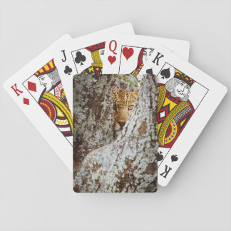 Leopard (Panthera Pardus) Hiding Behind Tree Playing Cards