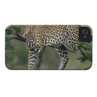 Leopard, (Panthera pardus), Kenya, Masai Mara Case-Mate iPhone 4 Cases