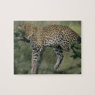 Leopard, (Panthera pardus), Kenya, Masai Mara Jigsaw Puzzle