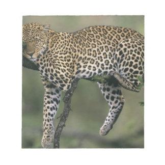 Leopard, (Panthera pardus), Kenya, Masai Mara Notepad