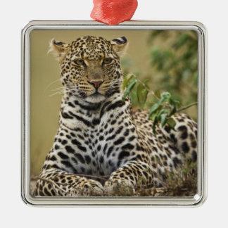 Leopard, Panthera pardus. Masai Mara Game Silver-Colored Square Decoration