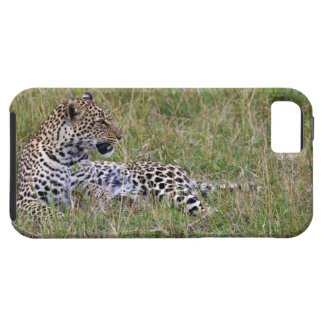 Leopard (Panthera pardus) resting in grass, Case For The iPhone 5