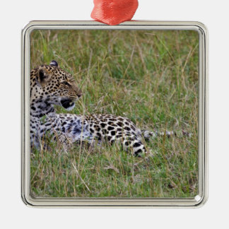 Leopard (Panthera pardus) resting in grass, Christmas Ornament