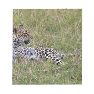 Leopard (Panthera pardus) resting in grass, Notepad
