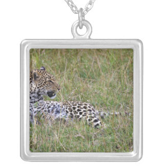 Leopard (Panthera pardus) resting in grass, Silver Plated Necklace