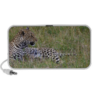 Leopard (Panthera pardus) resting in grass, Travel Speakers