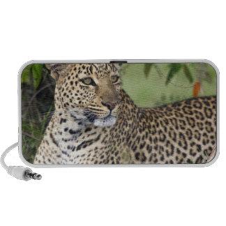 Leopard Panthera pardus) resting, Masai Mara Mini Speakers