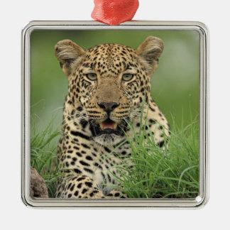 Leopard, Panthera pardus, Sabi Sabi Game Christmas Ornament