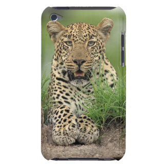 Leopard, Panthera pardus, Sabi Sabi Game iPod Touch Case