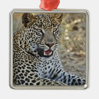 Leopard, Panthera pardus, Samburu Game Christmas Ornament