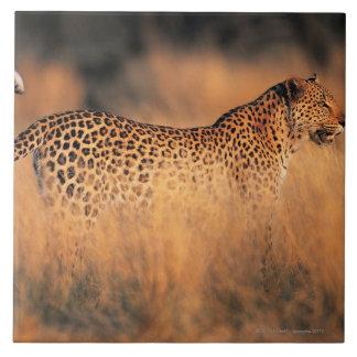 Leopard (Panthera pardus) Tile