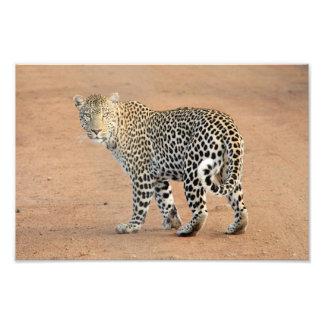 leopard photo art
