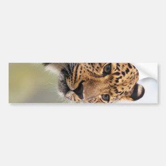 Leopard Photo Bumper Sticker