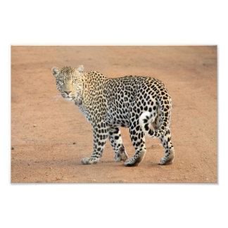 leopard art photo