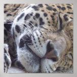 Leopard Picture Print