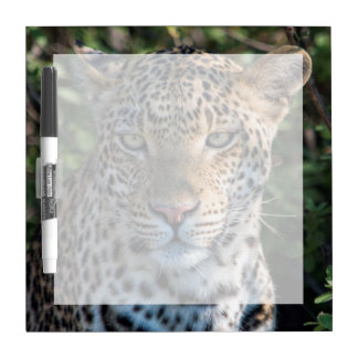 Leopard portrait, close up dry erase board