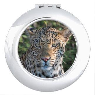 Leopard portrait, close up vanity mirrors