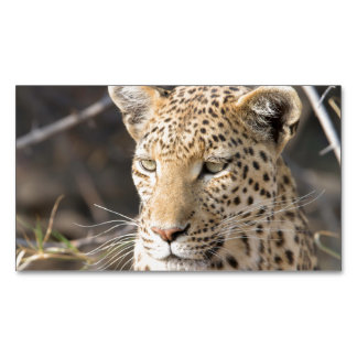 Leopard portrait magnetic business cards