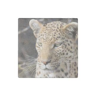 Leopard portrait stone magnet