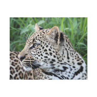 Leopard Profile Stretched Canvas Print