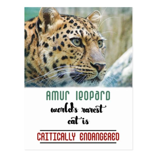 Leopard Protect the Wildlife quote Postcard