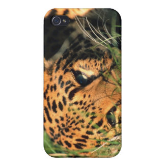 Leopard resting in grass case for the iPhone 4