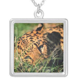 Leopard resting in grass square pendant necklace