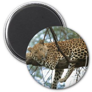 Leopard Resting in Tree 6 Cm Round Magnet
