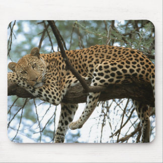 Leopard Resting in Tree Mouse Mat