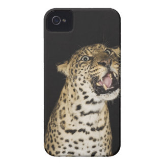 Leopard roaring iPhone 4 case