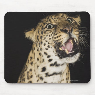 Leopard roaring mouse mat